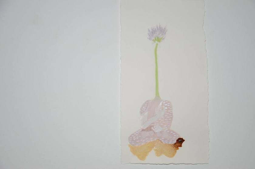 'Allium schoenoprasum'
